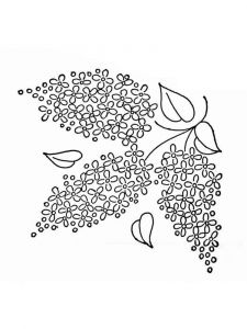 lilac-flower-coloring-pages-9