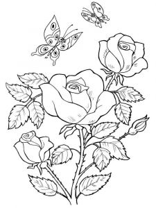 rose-flower-coloring-pages-5