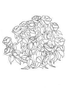 rose-flower-coloring-pages-8