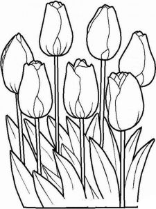 tulip-flower-coloring-pages-12