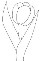 tulip-flower-coloring-pages-13