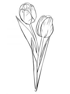 tulip-flower-coloring-pages-16