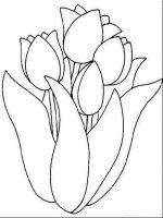 tulip-flower-coloring-pages-4