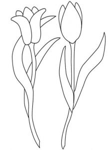 tulip-flower-coloring-pages-5