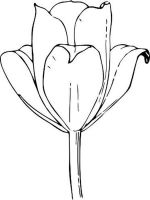 tulip-flower-coloring-pages-6