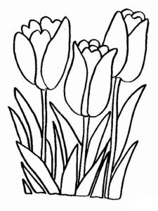 tulip-flower-coloring-pages-8
