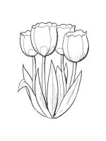 tulips-coloring-pages-21