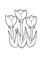 tulips-coloring-pages-33