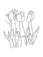 tulips-coloring-pages-34