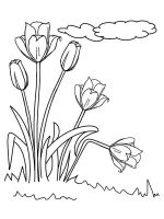 tulips-coloring-pages-40