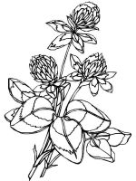 Clover-coloring-pages-11
