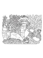 Coral-coloring-pages-13