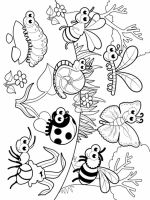 Insect-coloring-pages-2