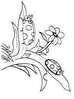 Insect-coloring-pages-32