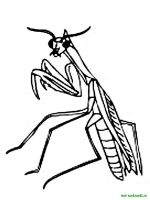 Insect-coloring-pages-33
