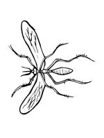 Insect-coloring-pages-46