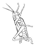 Insect-coloring-pages-47