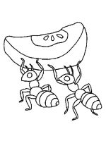 Insect-coloring-pages-48