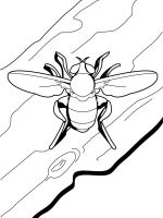 Insect-coloring-pages-51