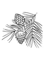Pine-Cone-coloring-pages-1