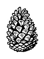 Pine-Cone-coloring-pages-11
