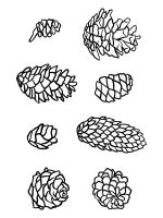 Pine-Cone-coloring-pages-18