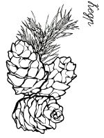 Pine-Cone-coloring-pages-3