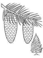 Pine-Cone-coloring-pages-4