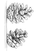 Pine-Cone-coloring-pages-6