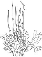 Seaweed-coloring-pages-1
