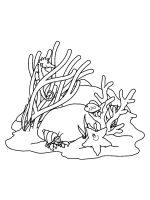 Seaweed-coloring-pages-16