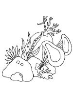 Seaweed-coloring-pages-3