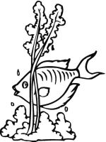 Seaweed-coloring-pages-4