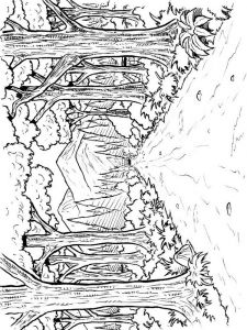 forest-coloring-pages-14