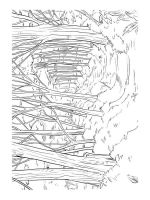 forest-coloring-pages-6
