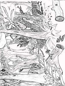 forest-coloring-pages-9