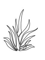 grass-coloring-pages-9