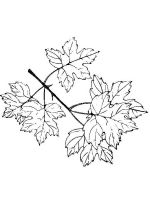 leaf-coloring-pages-14