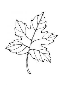 leaf-coloring-pages-15
