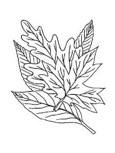 leaf-coloring-pages-17