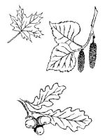 leaf-coloring-pages-18