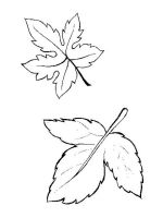 leaf-coloring-pages-19
