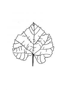 leaf-coloring-pages-20