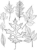 leaf-coloring-pages-22
