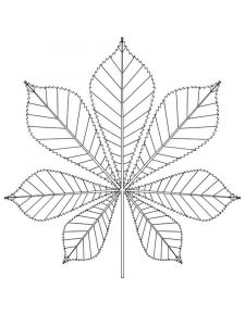 leaf-coloring-pages-30