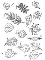 leaf-coloring-pages-44