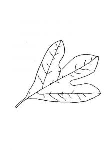 leaf-coloring-pages-7