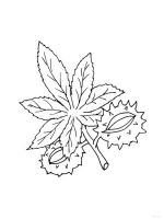 leaf-coloring-pages-8