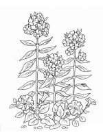 plants-coloring-pages-2
