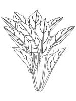 plants-coloring-pages-20